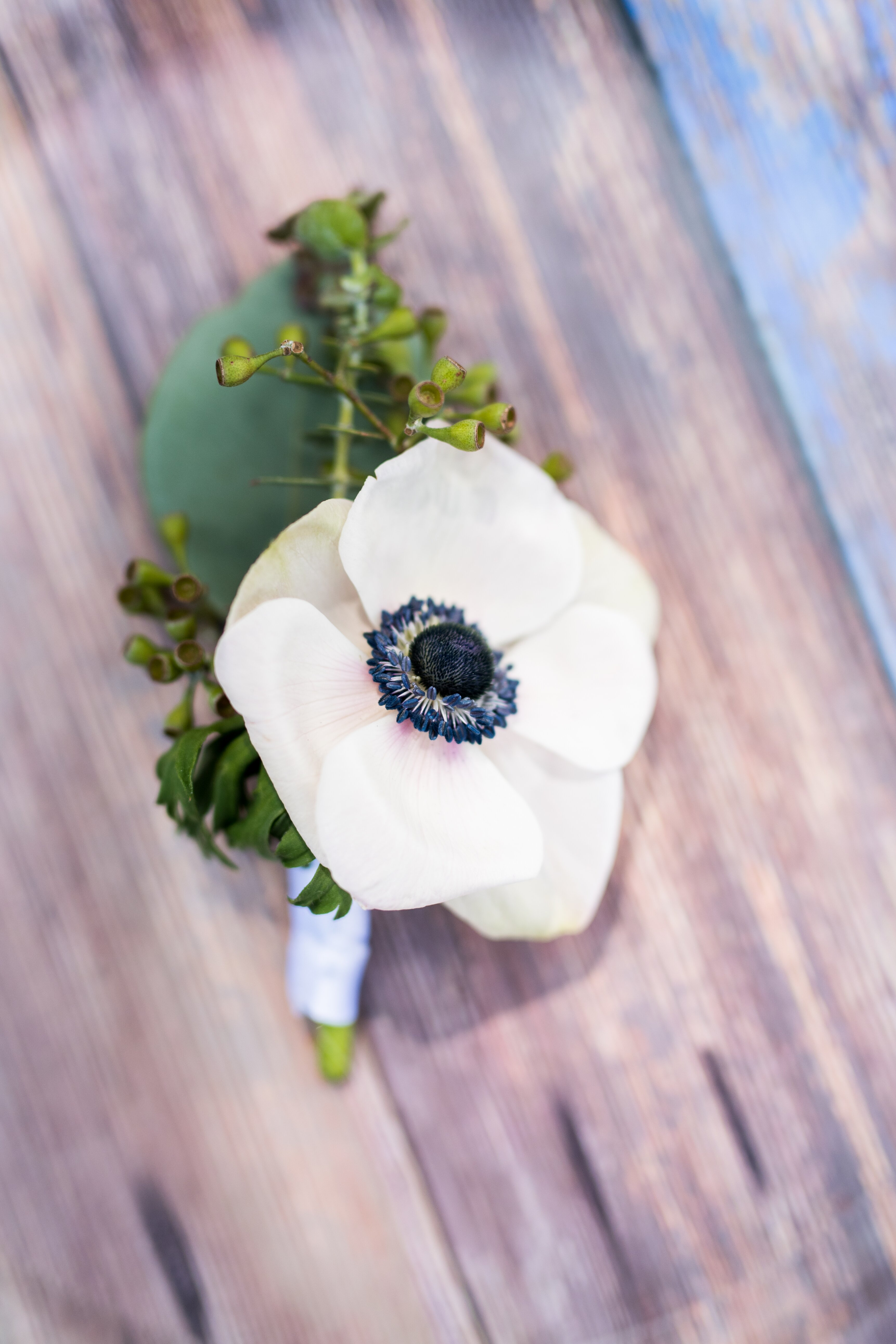 The anemone flower in bridal bouquets wonderland weddings these stunning soft blooms are typically in season between october and may ranging in bright red purple pink blue and magenta the most popular of these mightylinksfo Choice Image